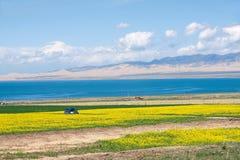 青海湖风景 库存照片