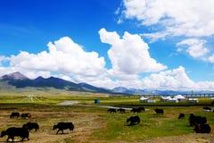 青海铁路西藏 库存图片