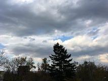 青灰色多云天空,树 黑暗的横向 免版税库存照片
