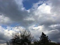 青灰色多云天空 黑暗的横向 黑暗的结构树 库存图片