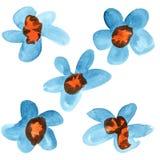 青的红色水彩花 库存图片