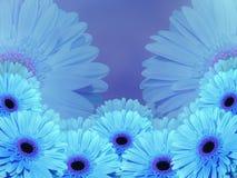 青的绿松石花,在蓝色弄脏了背景 特写镜头 免版税库存图片