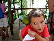 青的naped鹦鹉仍然尝试从男孩的食物 图库摄影