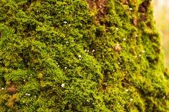青苔、地衣和真菌3 免版税库存图片