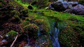 青苔包括的森林和流 免版税库存图片