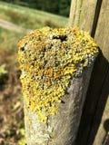 青苔和地衣在一个年轻树干 免版税库存照片