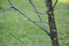 青苔和地衣在树枝 库存图片