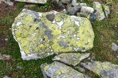 青苔和地衣在石头在尤通黑门山脉国家公园,挪威 库存照片