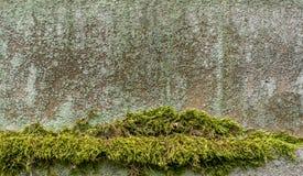 青苔和地衣在石头 图库摄影