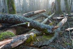 青苔和地衣被包裹的树零件 库存图片