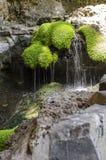 青苔和岩石瀑布 免版税库存照片