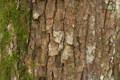 青苔和木头皮肤 免版税库存照片