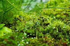 青苔和植物 免版税库存图片