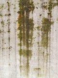 青苔和模子斑纹在一个混凝土墙下 免版税库存照片