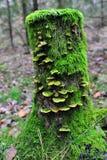 青苔和真菌盖了树桩 库存照片