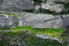 青苔和石头背景 砖墙纹理 在-增长的木头的老岩石 免版税库存照片