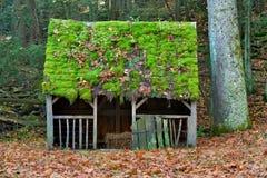 青苔和秋叶盖了羊圈的屋顶 免版税图库摄影