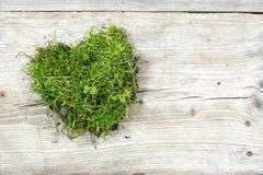从青苔和草的心脏形状在老木头,爱背景 免版税库存照片