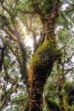 青苔和蕨在土井Inthanon国家公园种植在树干的coverd在清迈,泰国 图库摄影