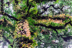 青苔和蕨在土井Inthanon国家公园种植在树干的coverd在清迈,泰国 免版税库存图片