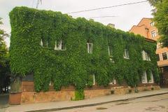 青苔和蕨在房子老屋顶  免版税库存图片