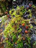 青苔和蘑菇宏指令在森林背景中 库存照片