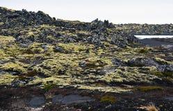 青苔在冰岛报道了熔岩荒野 库存照片