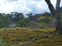 青苔在地面和树增长在Kinkakuji寺庙 免版税库存照片