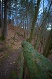 青苔在森林里盖了木篱芭 图库摄影