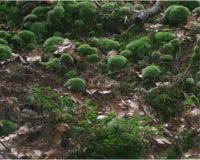 青苔在森林里 图库摄影