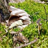 青苔在森林里 免版税库存照片