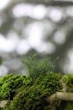 青苔在森林 库存图片