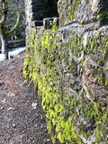 青苔在河盖了岩石墙壁 免版税库存照片