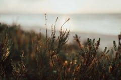 青苔在离海不远的森林里日落的在夏天 拉脱维亚 免版税库存图片