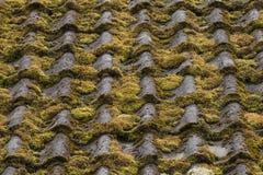 青苔在老农舍的自然瓦片增长 免版税库存照片