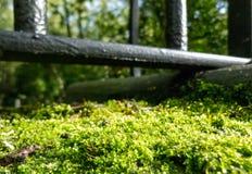 青苔在铁篱芭下的阳光下 库存图片