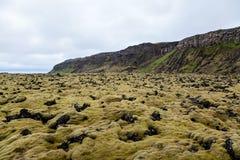 青苔在Heidmork冰岛报道了熔岩风景 免版税库存照片