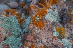 青苔岩石石头纹理 岩石自然本底关闭 免版税库存图片
