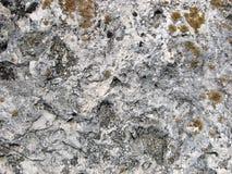 青苔岩石石头纹理 老轻的石头的详细的表面与红色地衣的 图库摄影