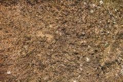 青苔岩石石头纹理 库存照片