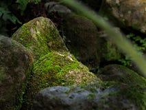 青苔岩石 库存图片