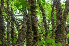 青苔树和叶子鲜绿色  库存图片