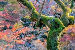 青苔树有彩虹背景 免版税库存图片