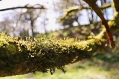 青苔树绿色 库存图片