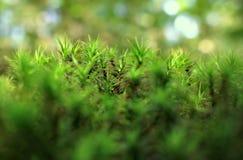 青苔森林美好的自然本底  库存图片