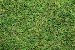 青苔植物绿色毛茸的涂层自然本底  免版税库存照片