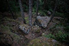 青苔用树和叶子盖了冰砾在森林 免版税图库摄影