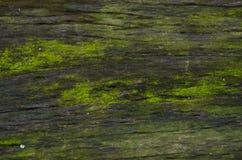青苔的样式在老木头的 免版税库存照片