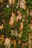 青苔的样式在老木头的 图库摄影