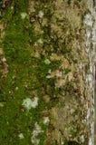 青苔的样式在老木头的 免版税图库摄影